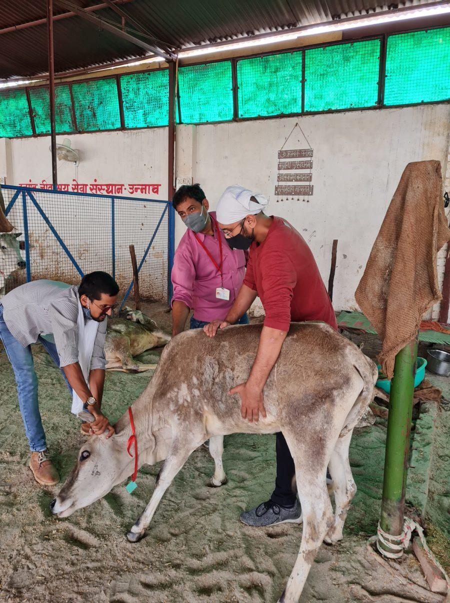 Hanumant Jeev Ashray - Animal Support Aid Unnao