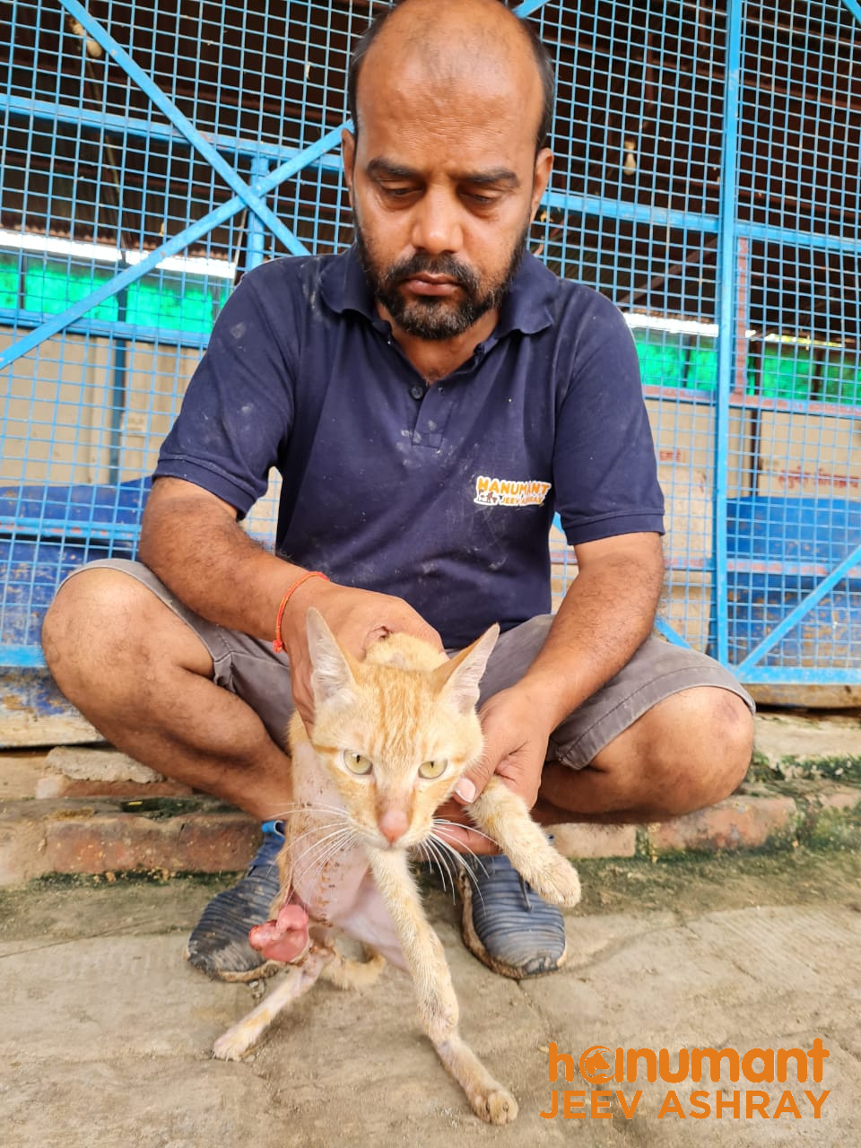Cat-rescue-in-Unnao