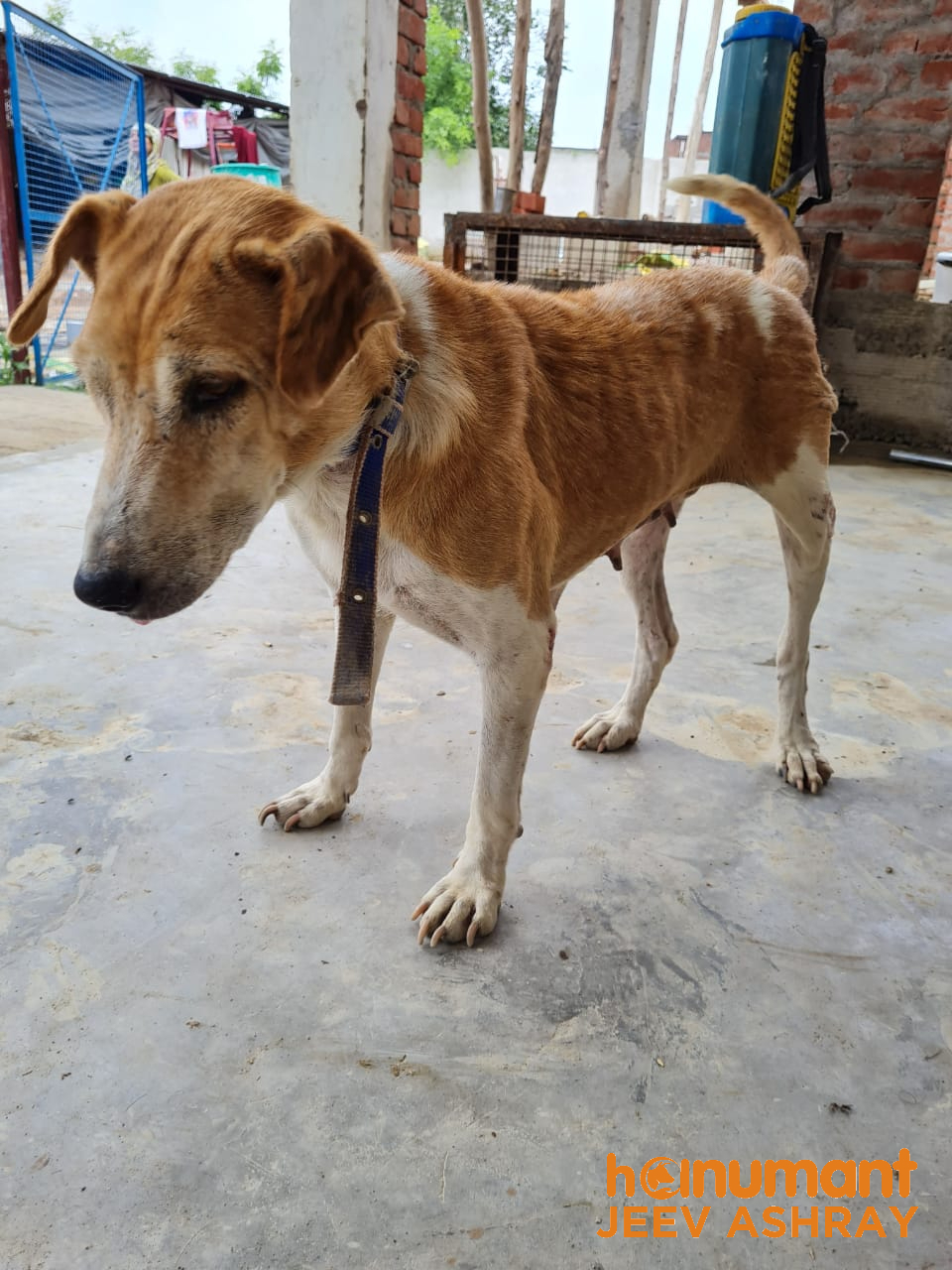 Puppy-rescue-in-Unnao